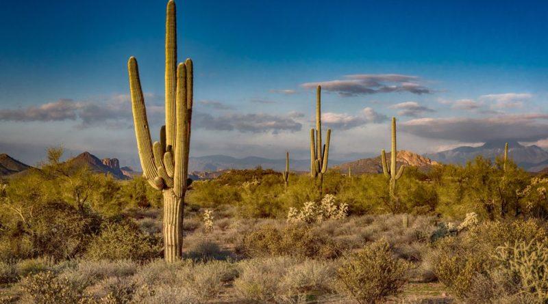 Guida Arizona